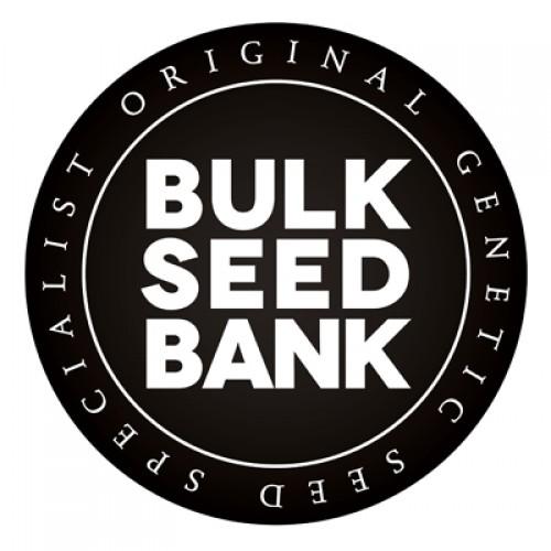 Auto Northern Light - Bulk Seed Bank (10st)